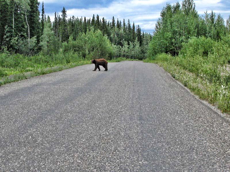Bear_3.jpg