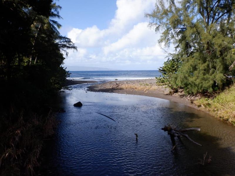 Maui Stream to ocean.jpg