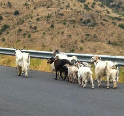 sicily trip sept 17 2012 meet the goats.jpg