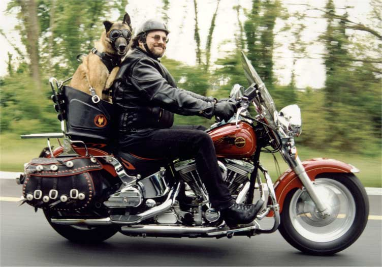 Modern Vespa Dog Trailer For Gts
