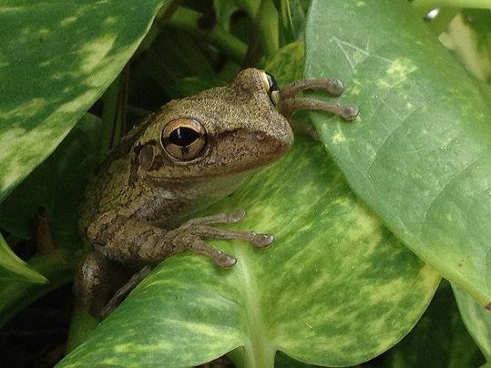 frog - Copy.JPG