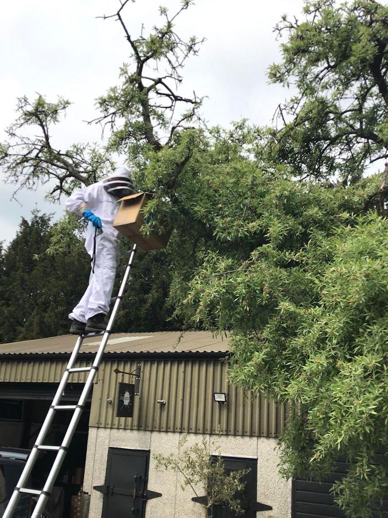 FoSC - Bees swarm 3.jpg