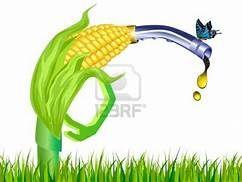 eth corn.jpeg